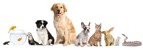 pet care tarvin pet care walking cat sitting cat care home visits small pet care