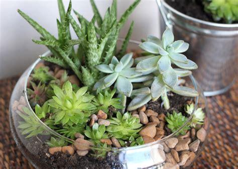 indoor succulent planter 10 diy indoor herb garden ideas and planters honey lime