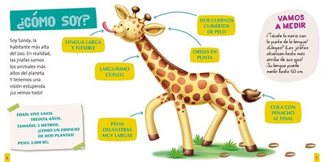 imagenes de jirafas para ninos jirafa para ninos informacion gallery
