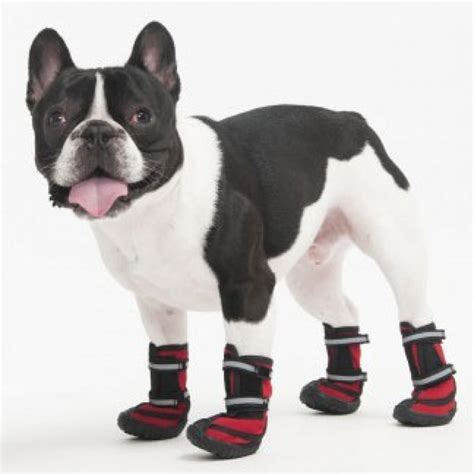 dogs finding dogs fashion pet lookin performance boots for dogs boots