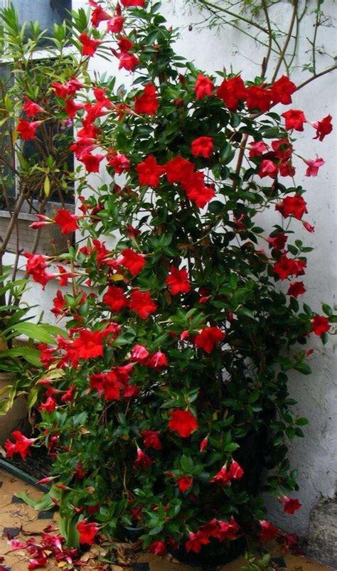 fiori terrazzo pi 249 di 25 fantastiche idee su fiori da balcone su