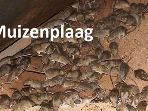 huis muis de huismuis de hygiene expert
