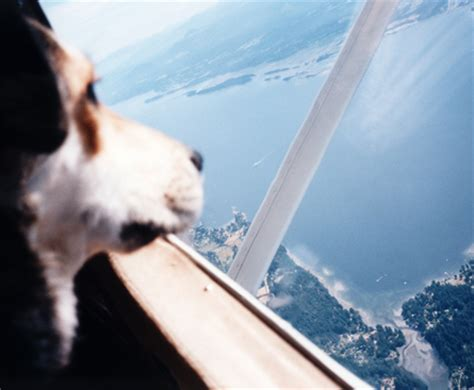 Air Canada Pet In Cabin by 301 Moved Permanently