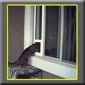 doggie door sliding glass insert america s choice for pet doors best dog door and pet
