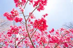 daydreaming images beautiful flowers wallpaper and