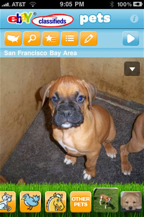 ebay classifieds puppies ebay classifieds pets app for iphone lifestyle