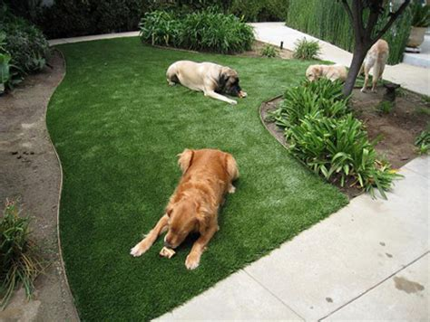 astro turf for dogs photos artificial grass artificial turf synthetic grass los angeles frass