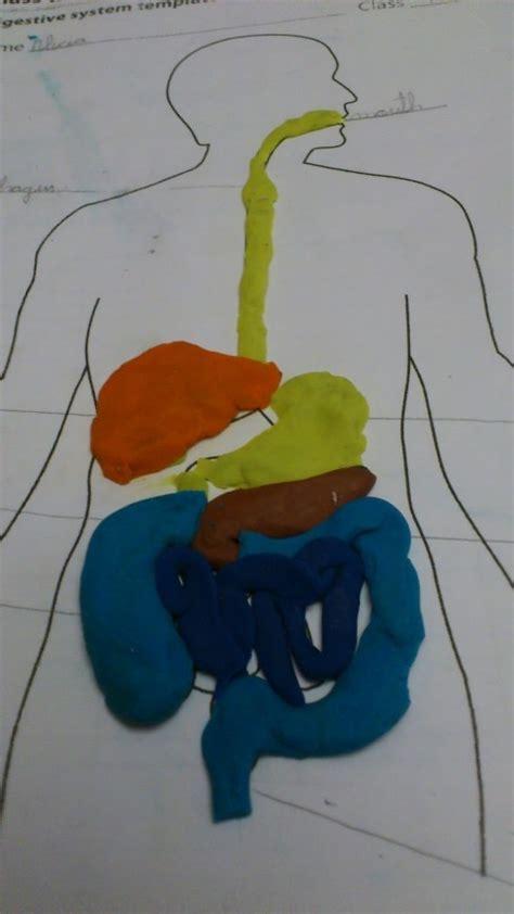 maqueta de sistema digestivo en plastilina manualidades del sistema digestivo para ni 241 os manualidades