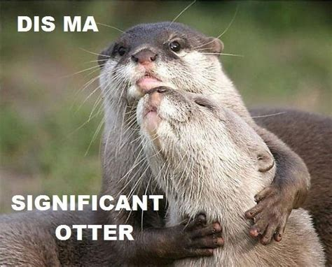 Otter Love Meme - significant otter weknowmemes