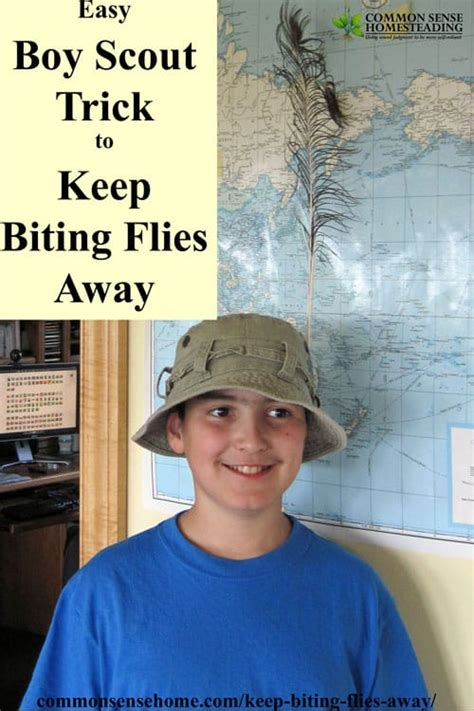 how to keep flies away from backyard deer fly control and deterrent tips to keep biting flies away
