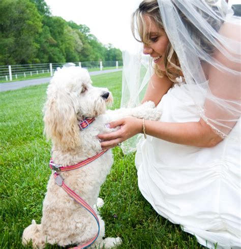 puppy house schedule puppy schedule available goldendoodle puppies schedule