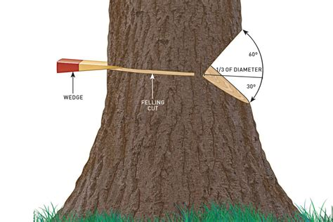 how to cut a tree diagram do it yourself diy basics essential guide to chainsaws
