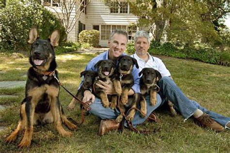 rottweiler rescue new orleans german shepherd search and rescue dogs breeds picture