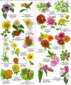 1000 images about flowers list names on pinterest orange flowers english and different types of