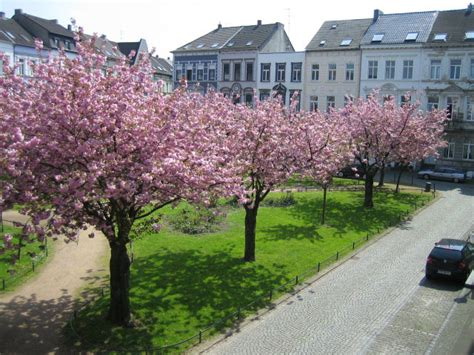 wohnungen in krefeld wohnungen krefeld 187 exklusive mietwohnungen in krefeld
