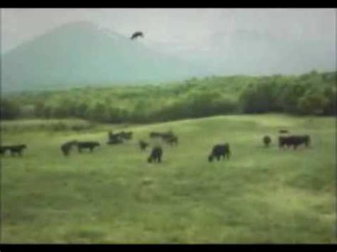 ufo cow abduction youtube