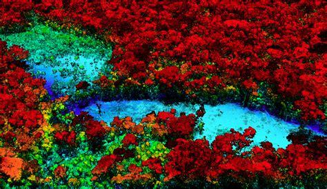 rainforest colors forest ah mazon