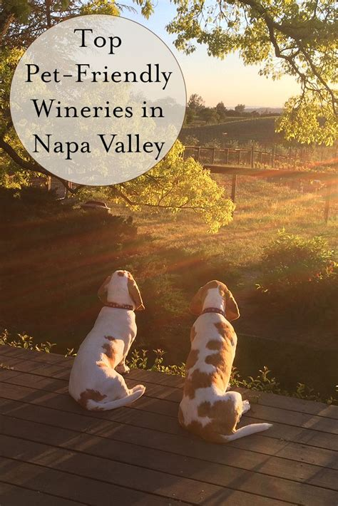 friendly wineries napa 17 best images about winery dogs on virginia vineyard and napa valley