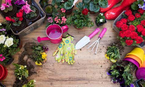 come curare i ciclamini in vaso ciclamino i colori e i segreti per mantenerlo bellissimo