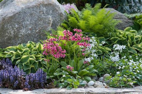 Fern Rock Garden Apartments Garden Ideas Border Ideas Perennial Planting Perennial Combination Borders Summer