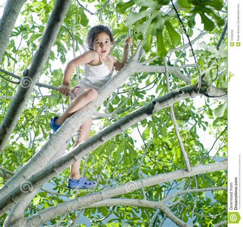 pimpandhost com young young girl on tree royalty free stock photos image 10765318