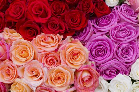 fiori per una donna nella festa della mamma sorprendila con un mazzo di fiori