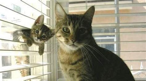 10 reasons scottsdale cat owner keeps his cat indoors
