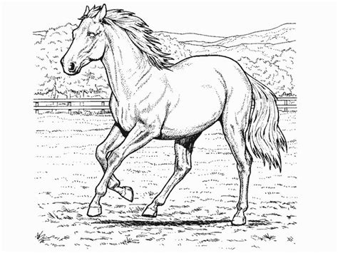 beautiful horse coloring pages printable coloring pages