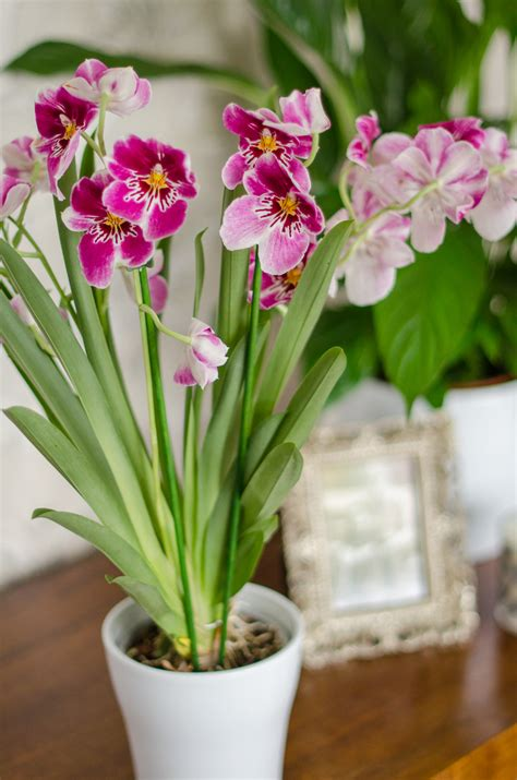 care of orchids after flowering orchid care tips with baby bio growing family