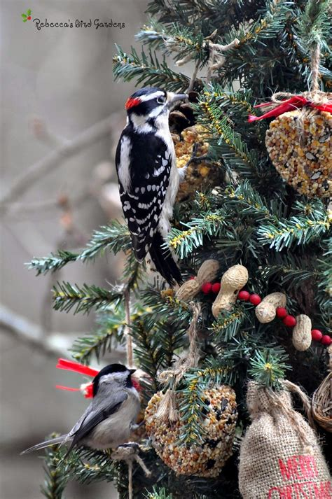 rebecca s bird gardens blog a christmas tree for the birds