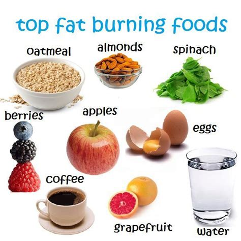 The Best Diet Fats And by Top Burning Foods Foods