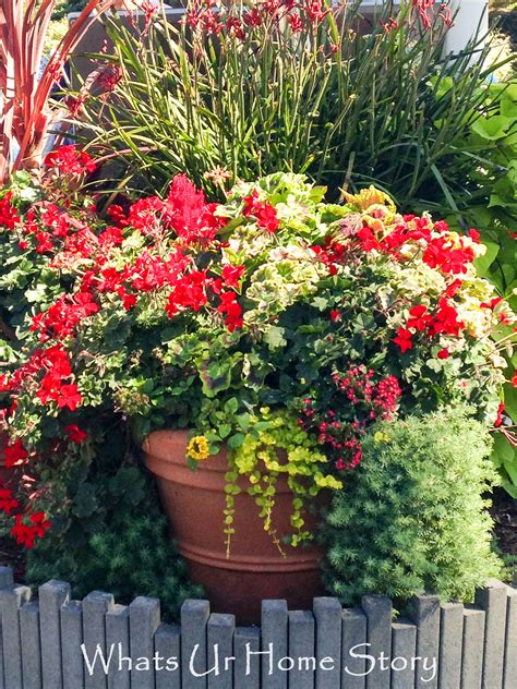 container gardening plant combinations container gardening whats ur home story
