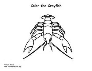 Crayfish Coloring Sheets Pages Sketch Coloring Page Crayfish Coloring Page
