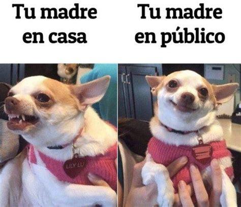 Meme Chihuahua - felizmiercoles dogsoftwitter meme morimos con este