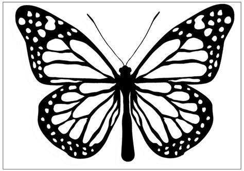 black and white coloring pages of butterflies butterfly images black and white cliparts co