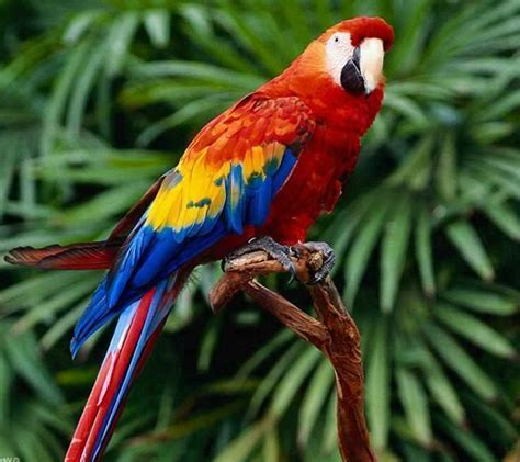 scarlet macaw cute and or beautiful pinterest animal