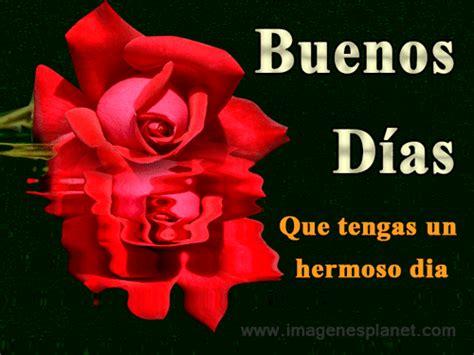 imagenes con frases de buenos dias con rosas hermosa rosa de amor con frases de buenos d 237 as en ingles