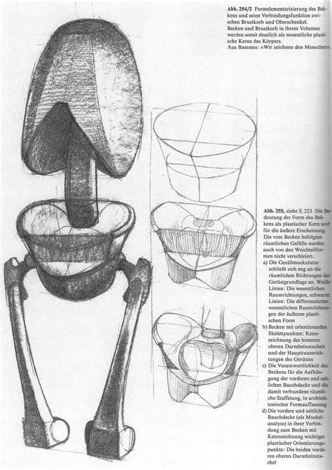 pelvis esqueleto humano frente cibertareas 25 melhores ideias de esqueleto humano anatomia no