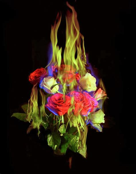 Mat Collishaw by Mat Collishaw Burning Flowers 2004 Ideas For School