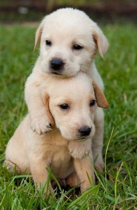 imagenes de animales tiernos para descargar im 225 genes tiernas de mascotas para descargar im 225 genes de