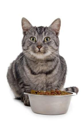 can cats eat food how to get finicky cats to eat the conscious cat