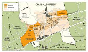 How To Organize A Wine Cellar - vougeot