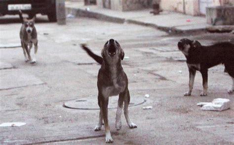 golden retriever puppies cost in kerala boxer for sale in kerala rajapalayam gsendhil kumar alsatian puppies for sale in