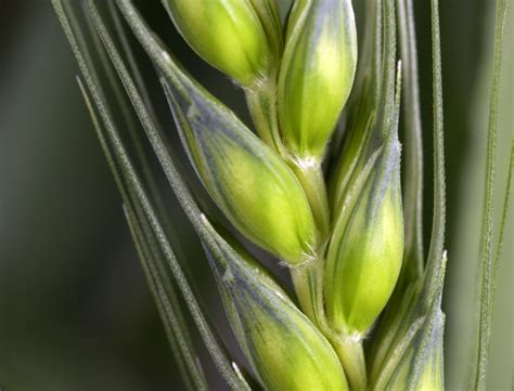 Questions Answers Plants genetically modified gm plants questions and answers