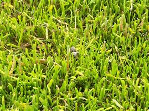list of types of grass ehow