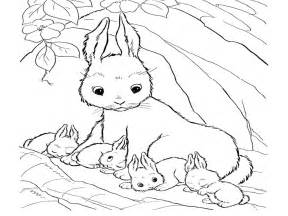 baby rabbit coloring pages rabbits coloring pages realistic realistic coloring pages
