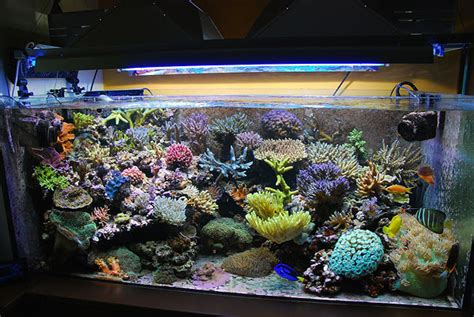 vasche per acquari marini vista della vasca pi 249 grande sistema marino di