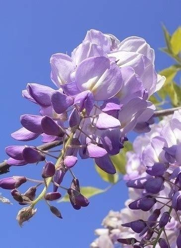 significato dei fiori amicizia fiori amicizia 2 significato dei fiori fiori amicizia 2