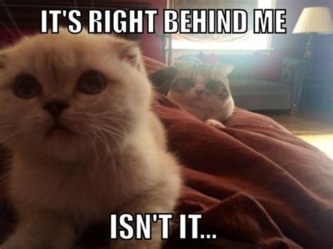 Meredith Meme - taylor swift posted a hilarious meme of her cats m magazine