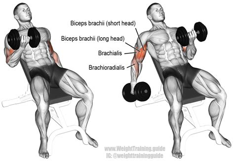 incline bench bicep curls incline dumbbell curl instructions and video weight